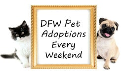 Lost Paws Rescue of Texas - DFW Pet Adoptions Every Weekend