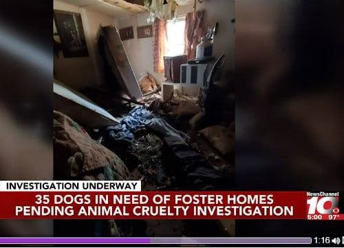 'Animal control deputies rescue 35 dogs from West Texas home' - newschannel10.com Amarillo