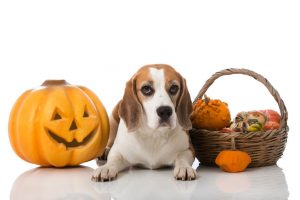Lost Paws Rescue of Texas - Health Benefits of Pumpkin for Dogs and Cats