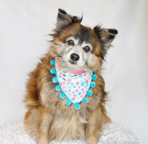 Lost Paws Rescue of Texas - Sweet Seniors Rescue Program