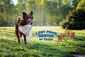Lost Paws Rescue of Texas - Thank You for Your Donation