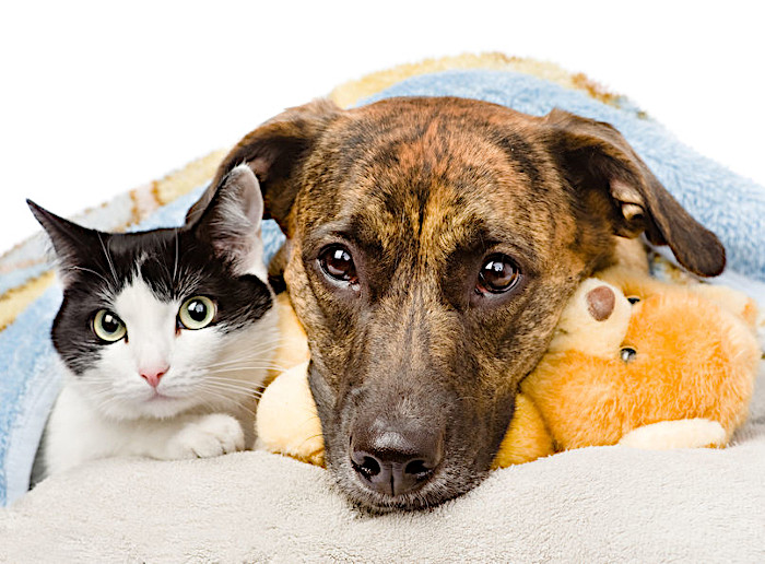 Lost Paws Rescue of Texas - We Appreciate Your Help in Adopting Homeless Dogs and Cats