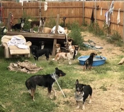 Lost Paws Rescue of Texas Helps Chloe's K9 Sanctuary-2, Aug 2021