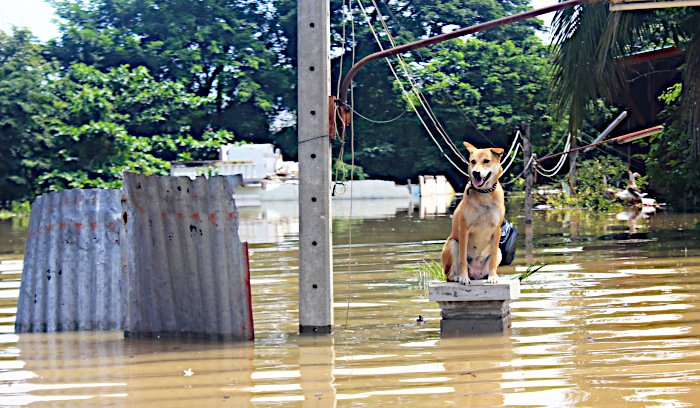 Lost Paws Rescue of Texas - Disaster Animal Shelter Assistance Program